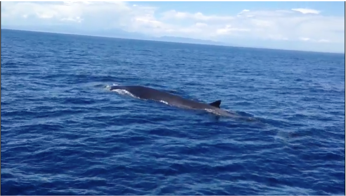 Impresionante ballena durante la travesía de Barcelona a Menorca